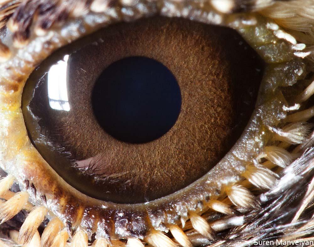 animal eyes 1 Глаза животных