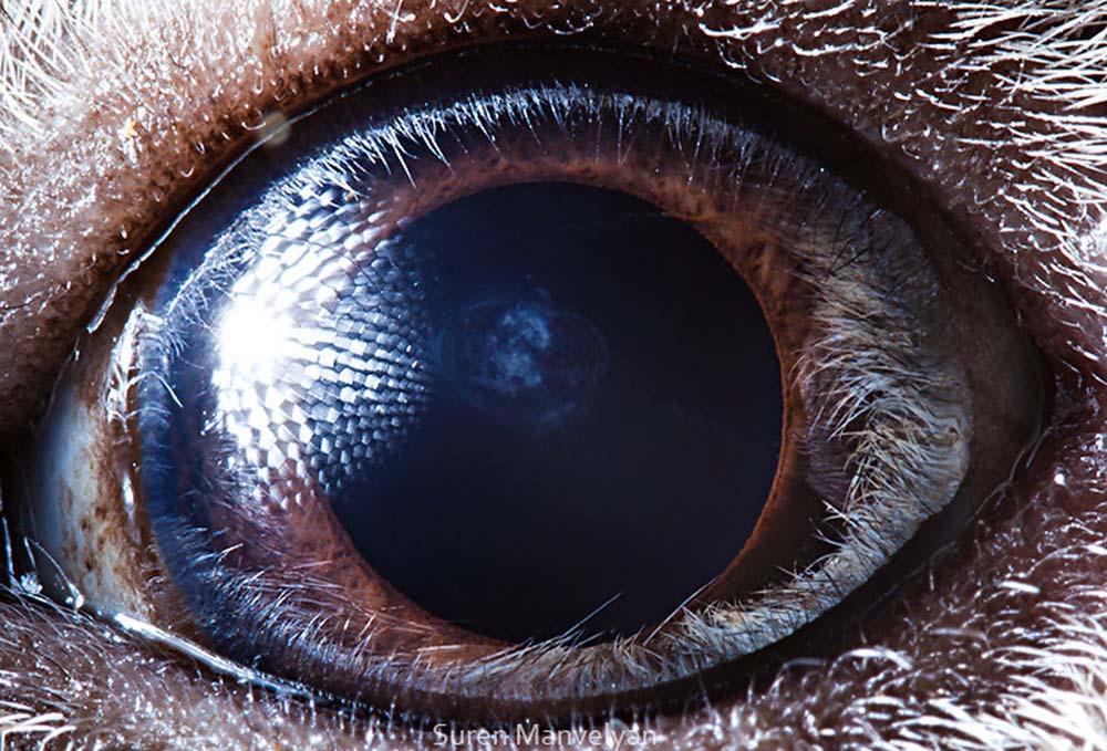 animal eyes 11 Глаза животных