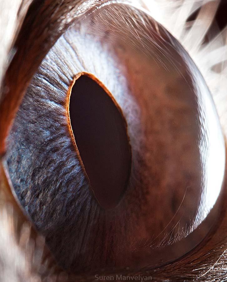 animal eyes 14 Глаза животных