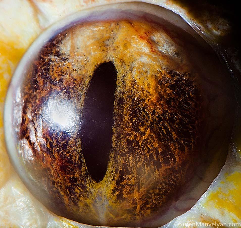 animal eyes 15 Глаза животных