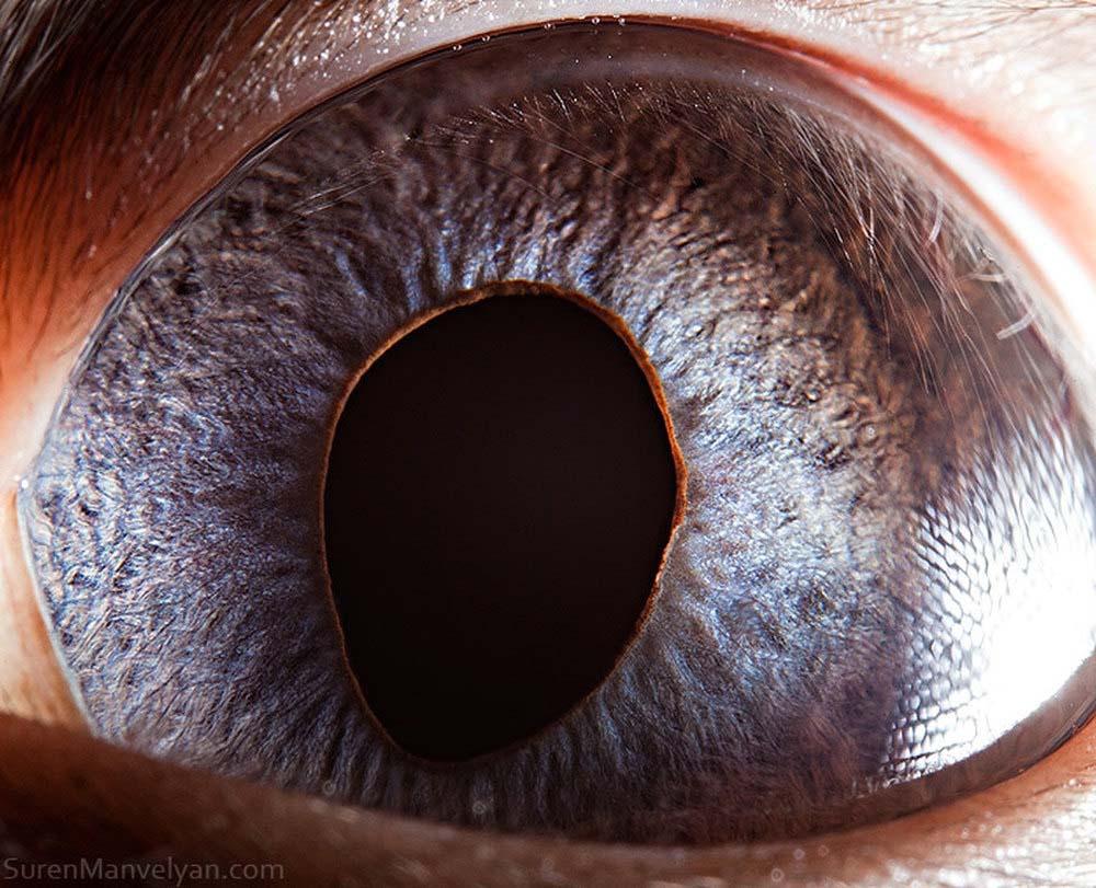 animal eyes 16 Глаза животных