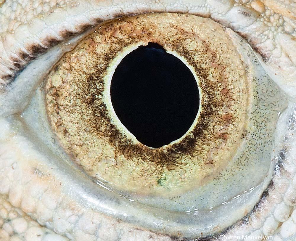 animal eyes 17 Глаза животных