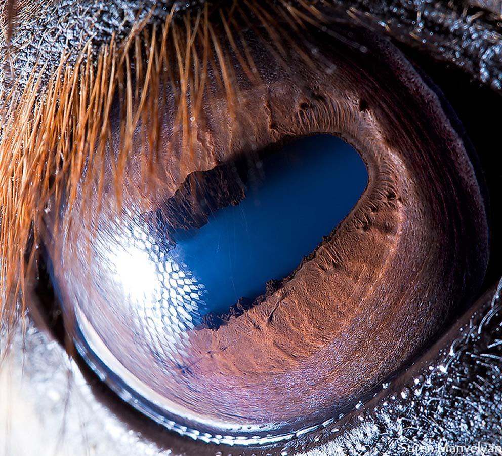 animal eyes 18 Глаза животных