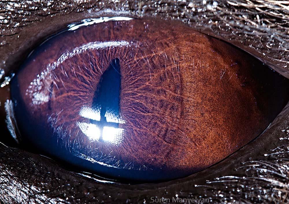 animal eyes 19 Глаза животных