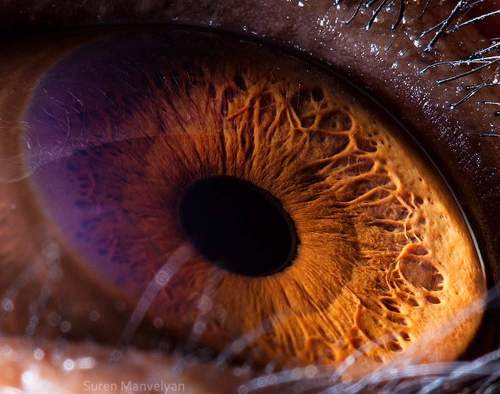 animal eyes 2 Глаза животных