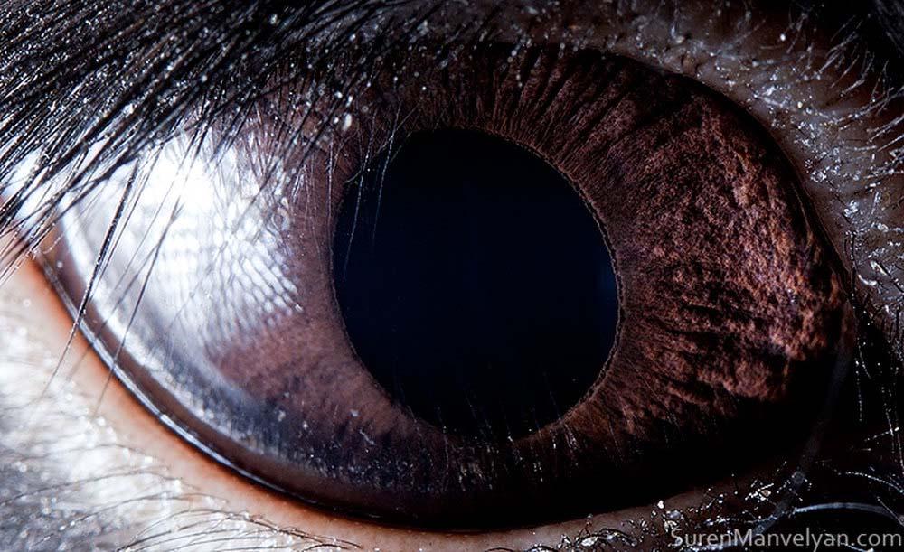 animal eyes 20 Глаза животных