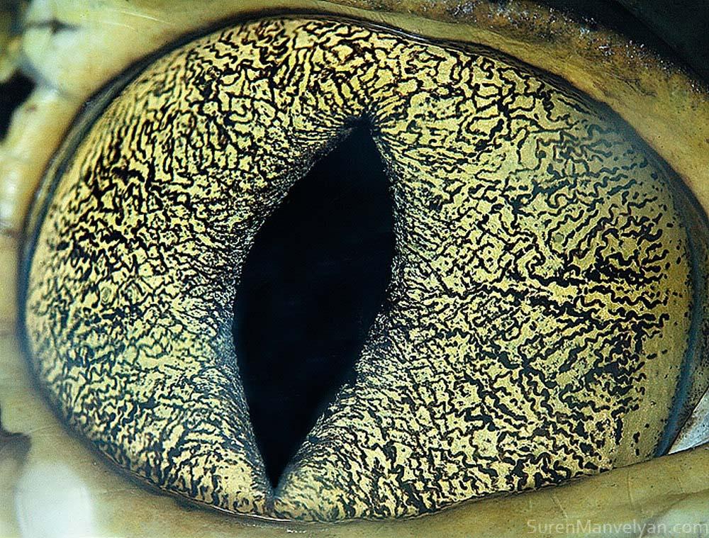 animal eyes 21 Глаза животных