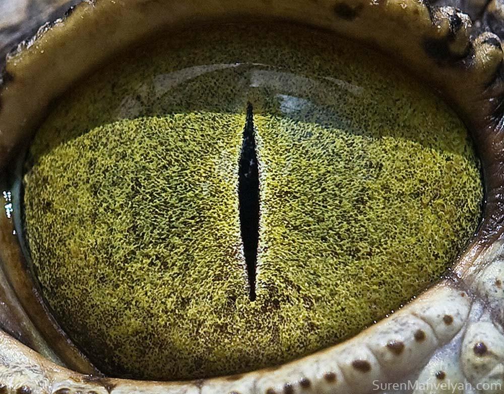 animal eyes 22 Глаза животных