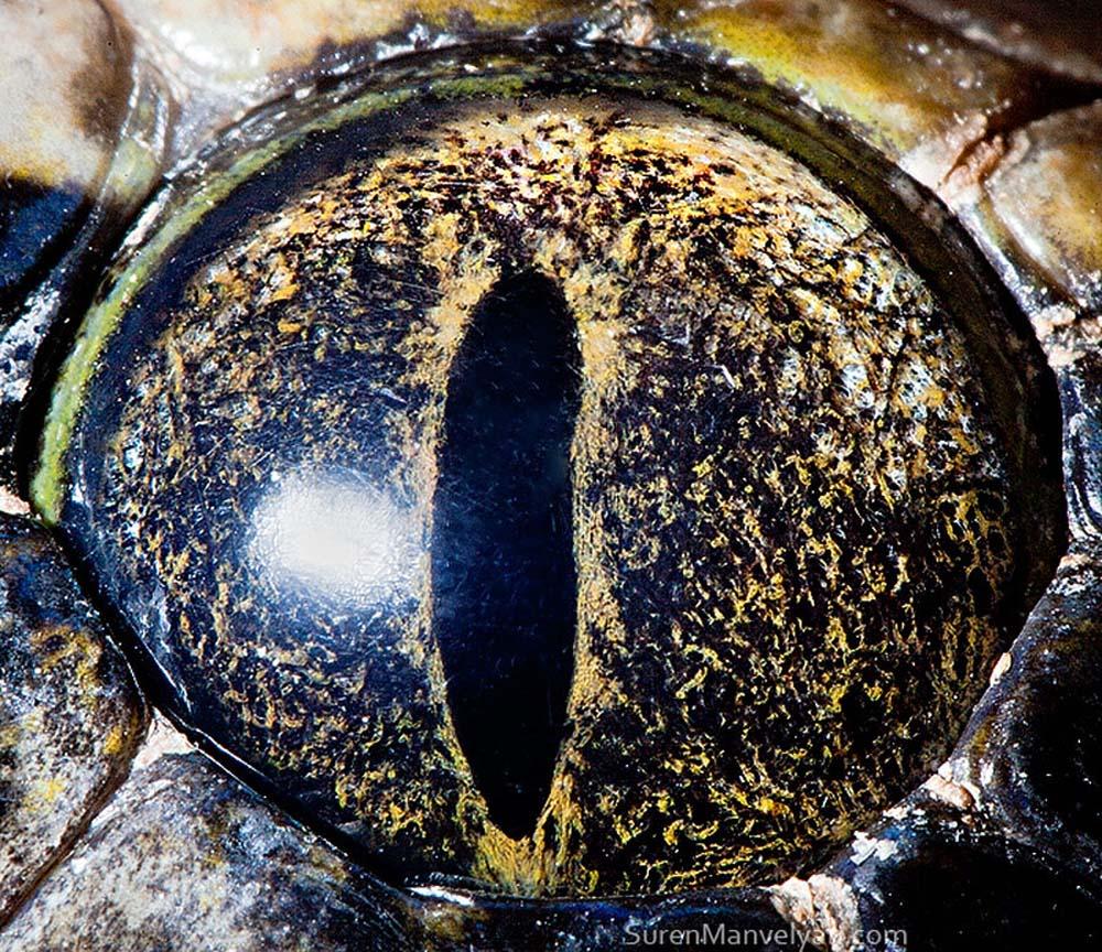 animal eyes 23 Глаза животных