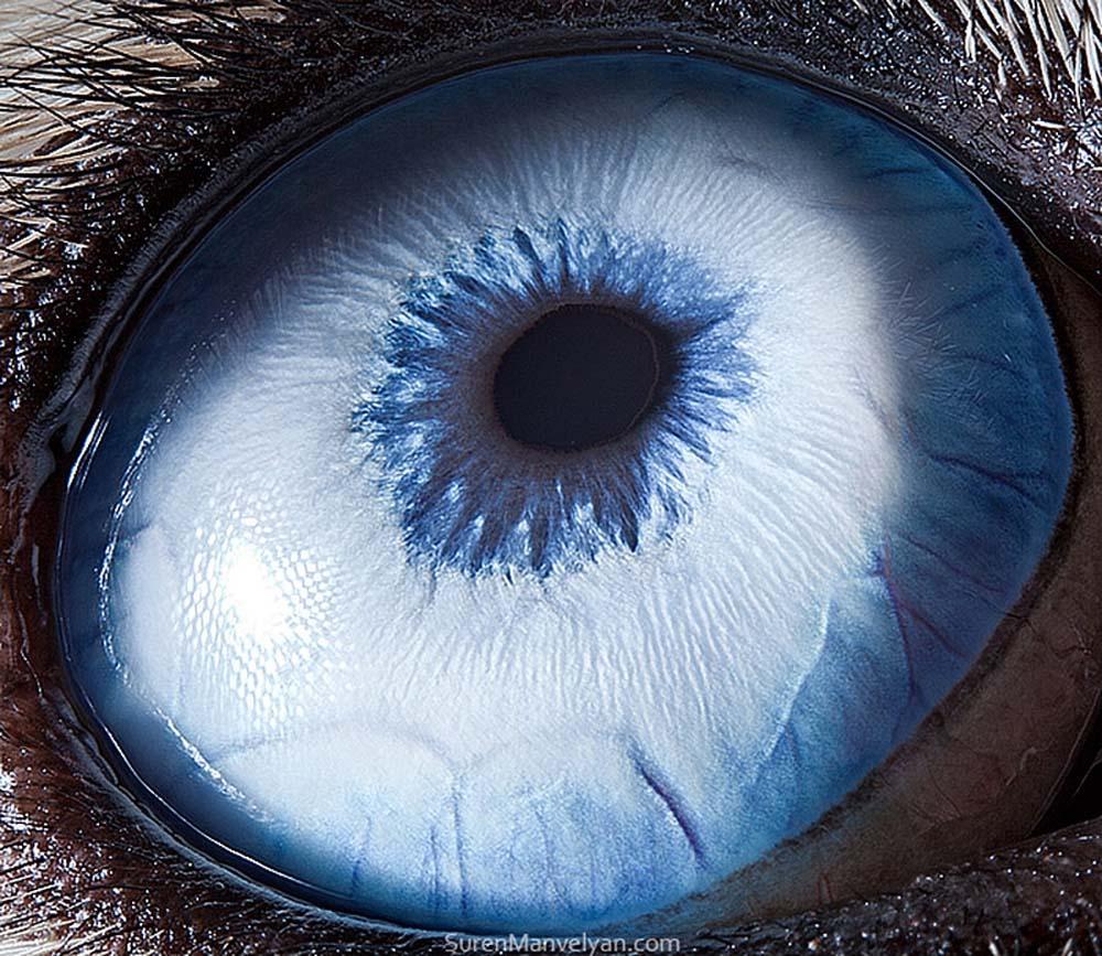 animal eyes 24 Глаза животных