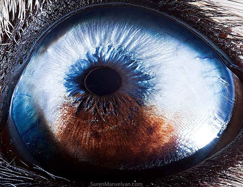 animal eyes 25 Глаза животных