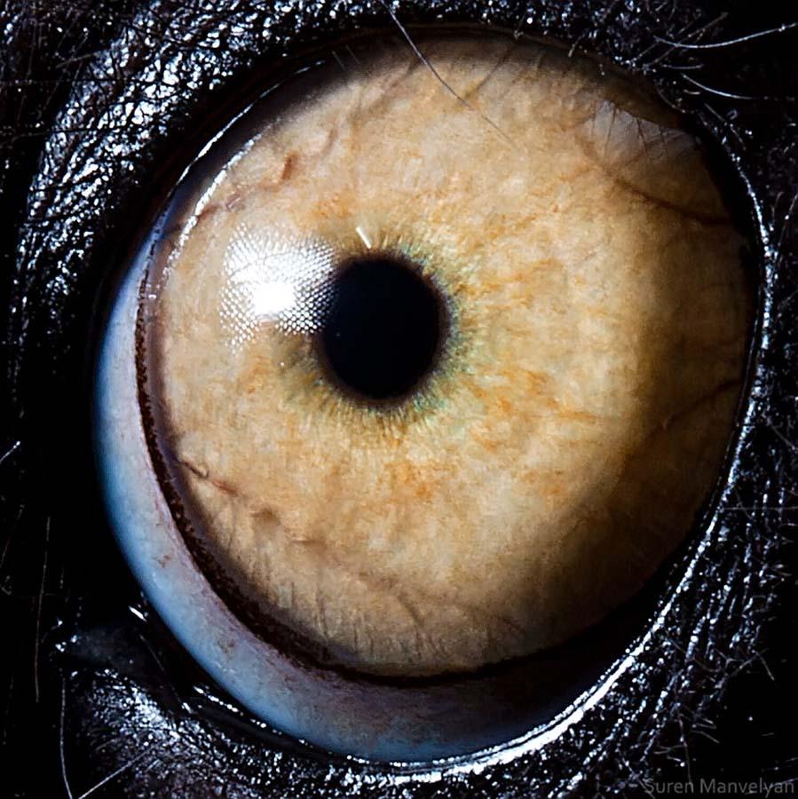 animal eyes 3 Глаза животных