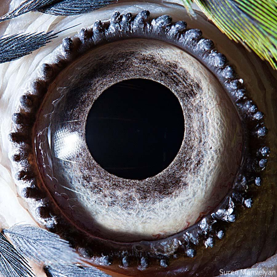 animal eyes 4 Глаза животных