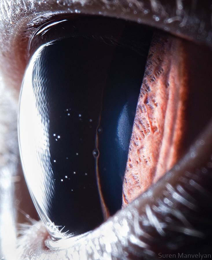 animal eyes 5 Глаза животных