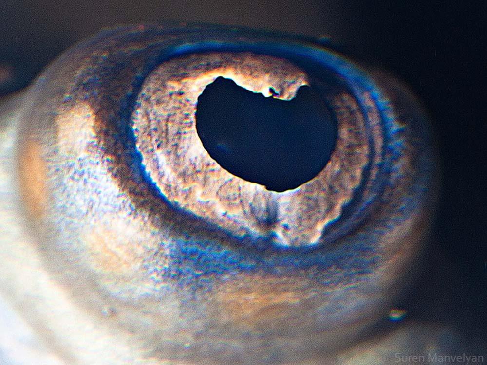 animal eyes 6 Глаза животных