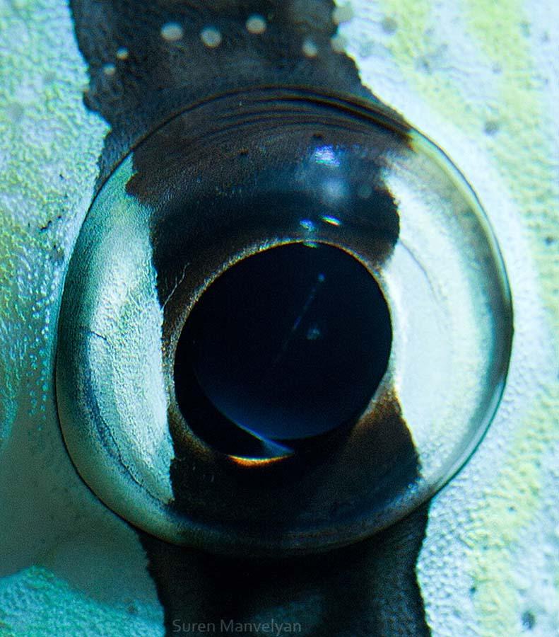 animal eyes 8 Глаза животных
