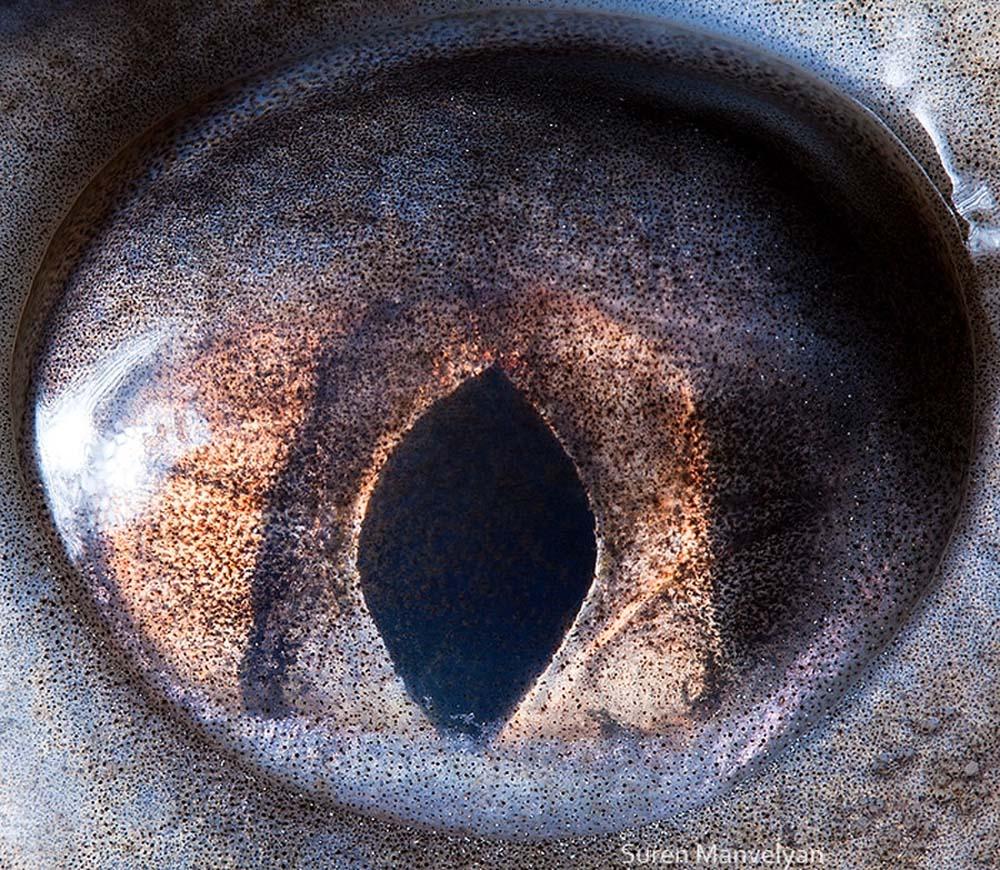 animal eyes 9 Глаза животных