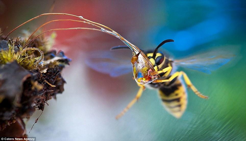 beee 3 В кадре   осы