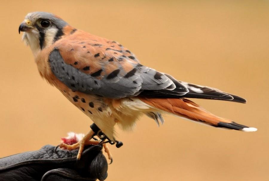 birdie02 Топ 10 самых красивых птиц в мире