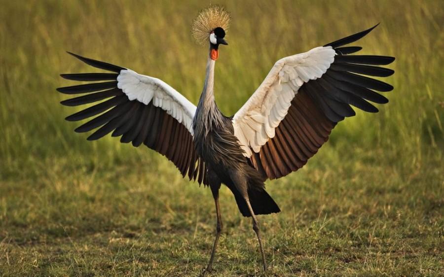 birdie04 10 самых красивых птиц в мире