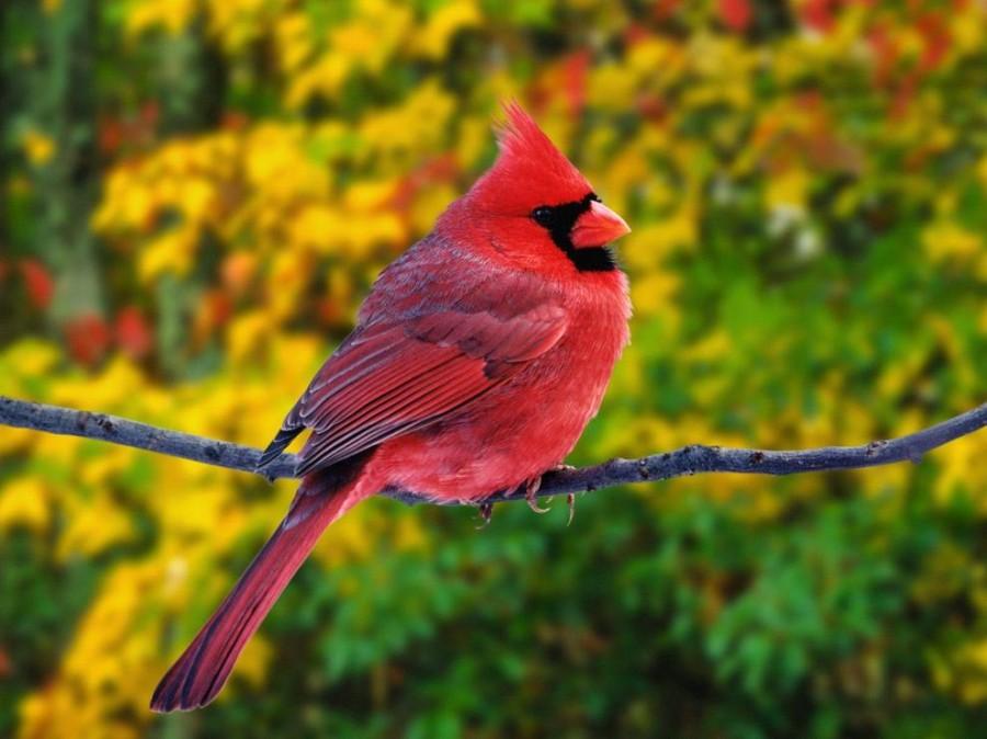 birdie05 10 самых красивых птиц в мире