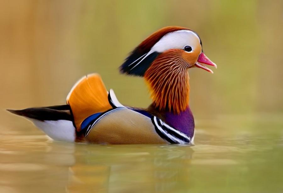 birdie08 10 самых красивых птиц в мире