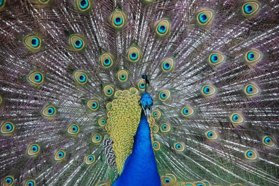 birdie10 10 самых красивых птиц в мире