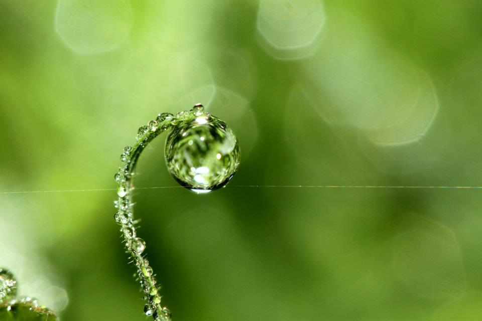 bubble05 Макросъемка Шэрон Джонстон: Капли росы