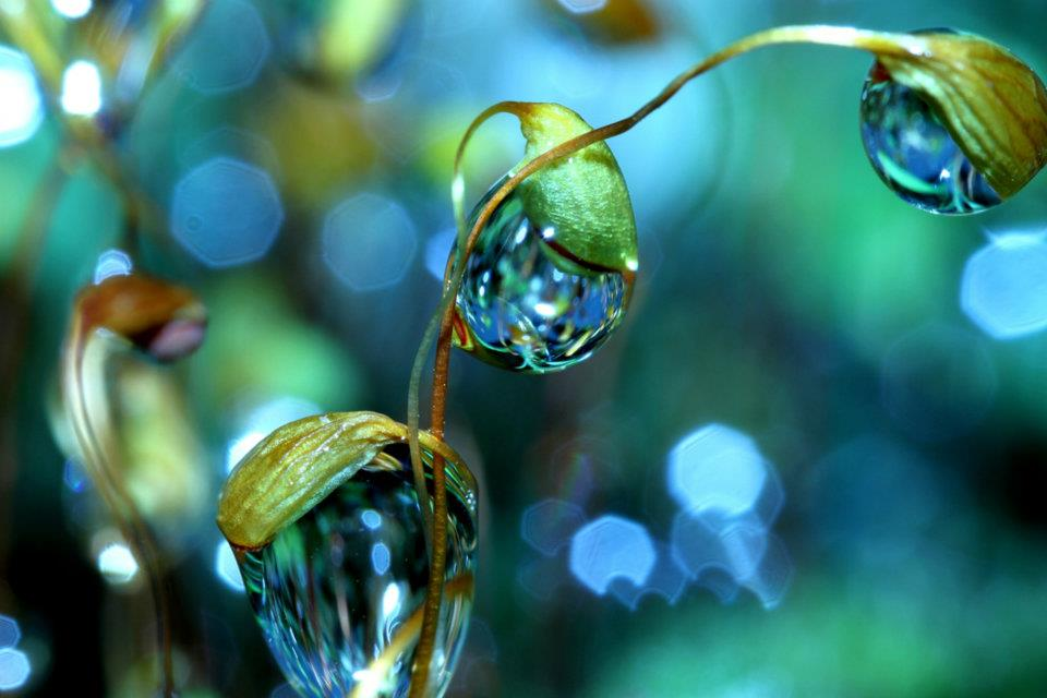 bubble06 Макросъемка Шэрон Джонстон: Капли росы