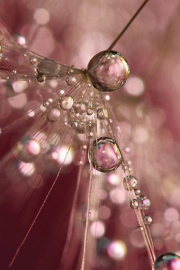 bubble07 Макросъемка Шэрон Джонстон: Капли росы