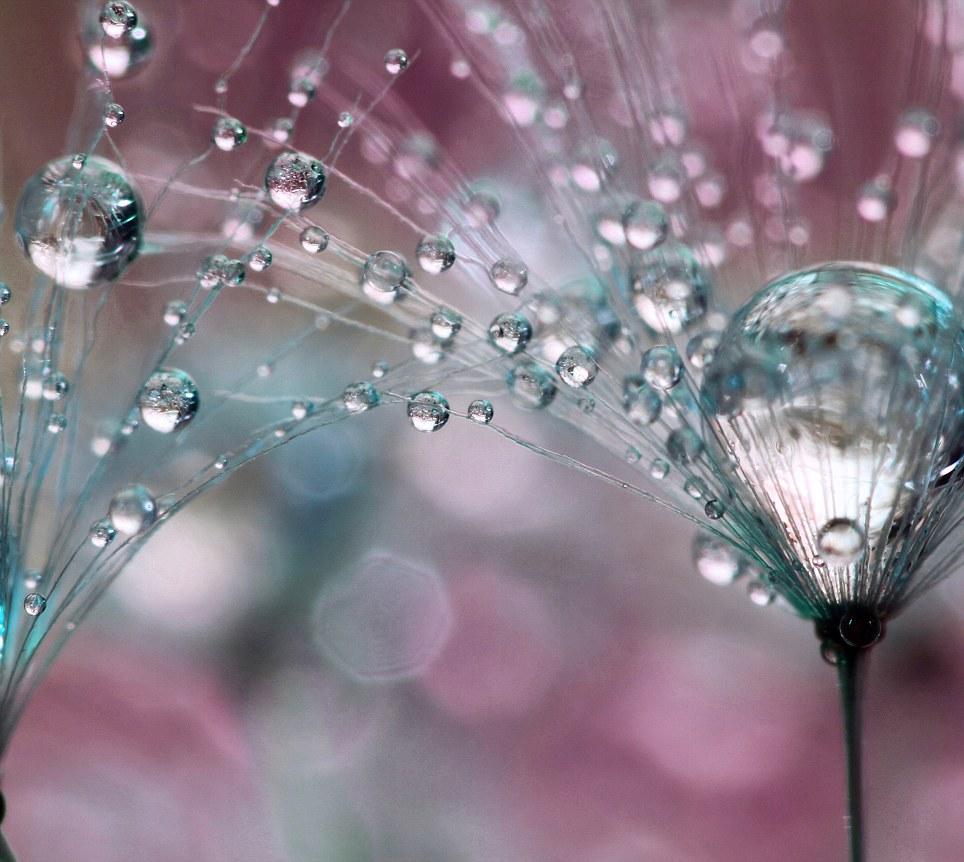 bubble13 Макросъемка Шэрон Джонстон: Капли росы
