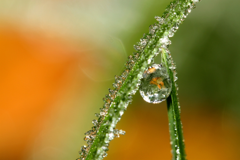 bubble17 Макросъемка Шэрон Джонстон: Капли росы
