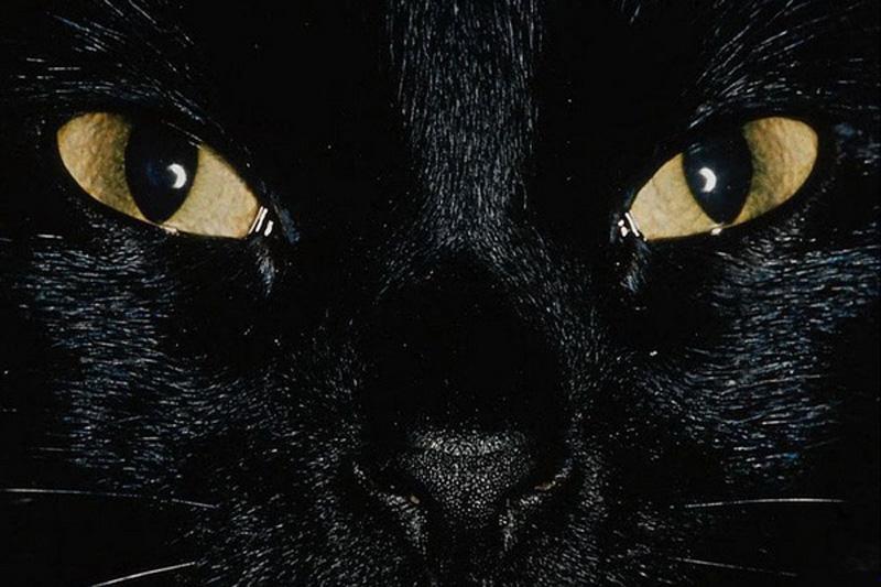 cats mixstuff 2 6 милых кошачьих повадок и их неожиданные объяснения