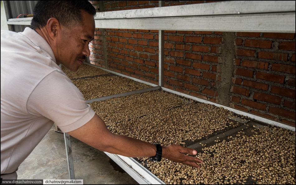 coffee 10 Про самый дорогой в мире кофе