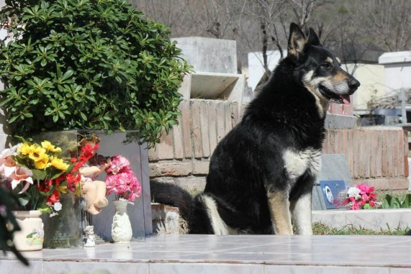 dog 1 800x533 Верный пес убежал из дома к могиле хозяина и живет там уже 6 лет