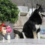 Верный пес убежал из дома к могиле хозяина и живет там уже 6 лет