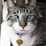 Самый милый косоглазый кот