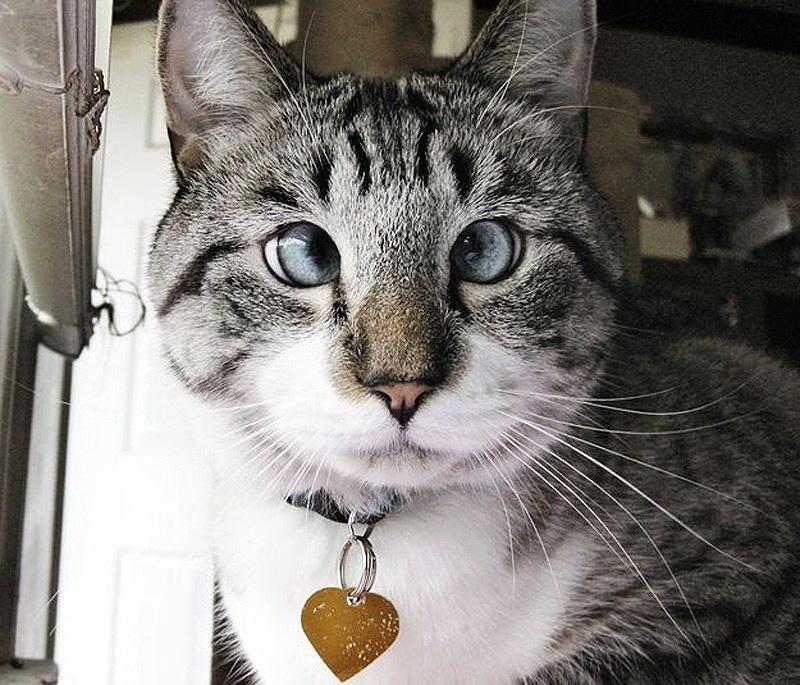самые смешные кошки в мире фото следователи предположили
