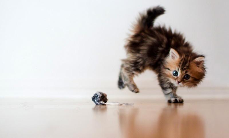 kitten 1 Самый милый котенок на Земле