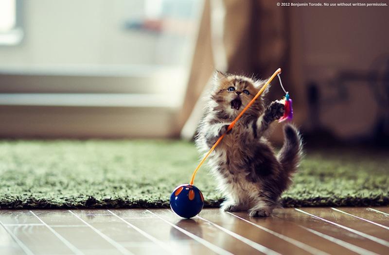 kitten 10 Самый милый котенок на Земле
