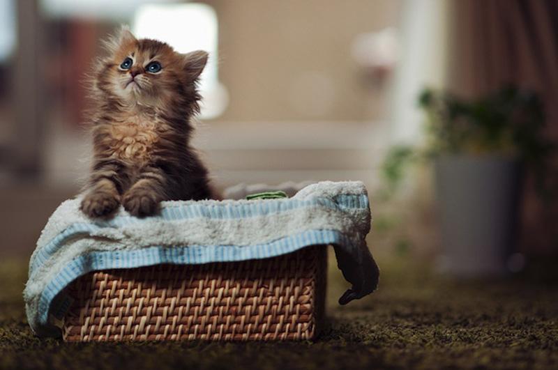 kitten 11 Самый милый котенок на Земле