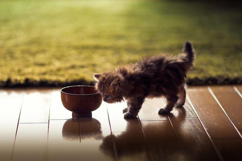 kitten 12 Самый милый котенок на Земле