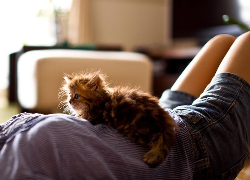 kitten 13 Самый милый котенок на Земле