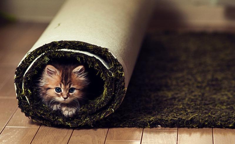 kitten 14 Самый милый котенок на Земле