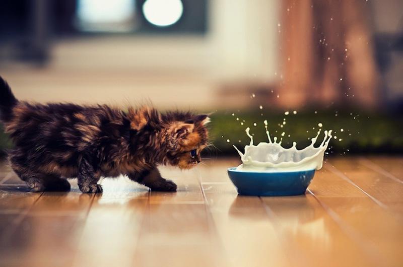 kitten 15 Самый милый котенок на Земле