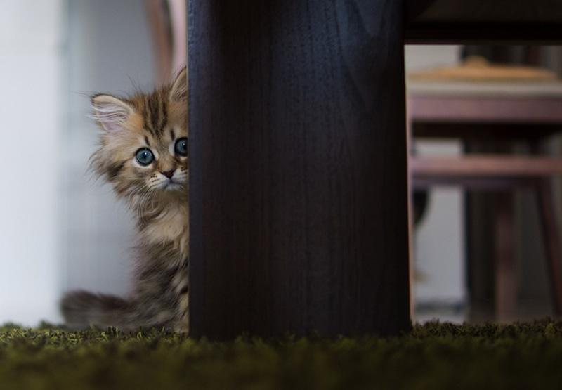 kitten 16 Самый милый котенок на Земле