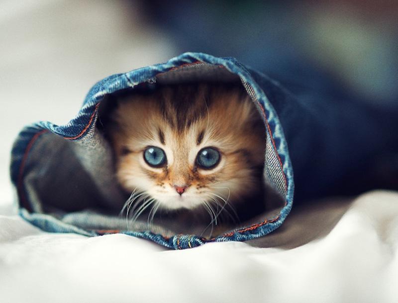 Самый милый котенок наЗемле