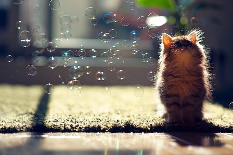 kitten 18 Самый милый котенок на Земле
