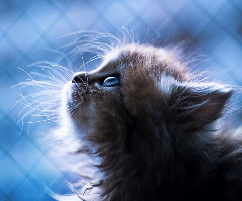 kitten 19 Самый милый котенок на Земле