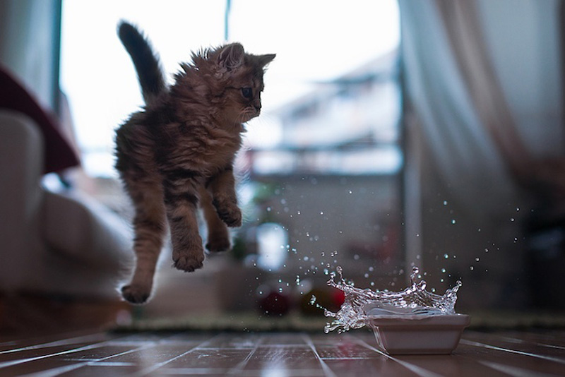 kitten 2 Самый милый котенок на Земле